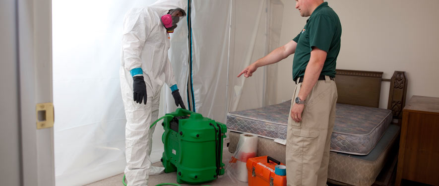 Spring Valley, CA mold removal process